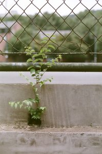 plant growing near a fence
